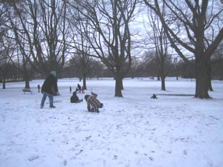 Children in Acton Park testing the slopes on sleds